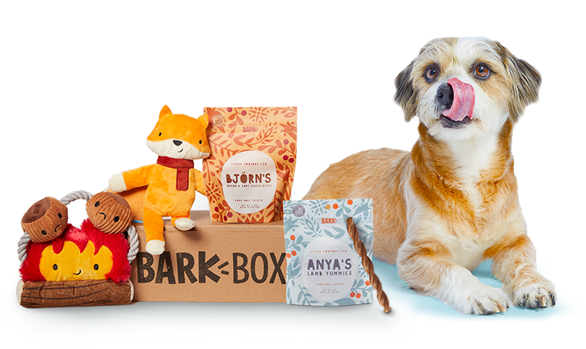Dog with Hygge BarkBox and Toys